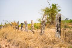 Highland scenery in central Vietnam, with wooden fence made of dead fired tree, and yellow grass field royalty free stock image