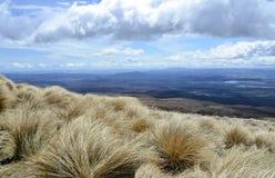 Highland shrubbery stock photo