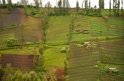 Highland Village i Java, Indonesien Arkivbilder