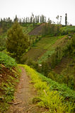 Highland village in Java, Indonesia Royalty Free Stock Photo