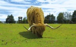 Highlander Στοκ Εικόνα