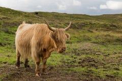 highlander Στοκ Φωτογραφία