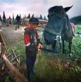 Highlanders πηγαίνουν στο σπίτι Στοκ Εικόνες