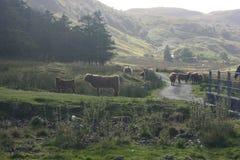 highlands Стоковые Изображения