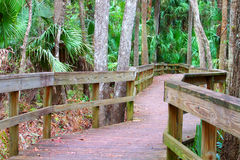 Highlands Hammock State Park Royalty Free Stock Images