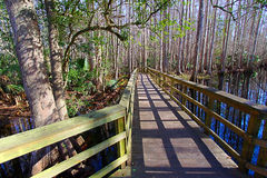 Highlands Hammock State Park Florida Stock Image