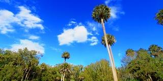 Highlands Hammock State Park Florida Stock Photos