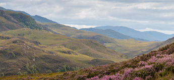 Highlands and Heath Royalty Free Stock Images