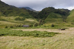 Highlands landscape in Scotland. UK. Taken during the Jacobite Train trip from Fort William to Mallaig Stock Images