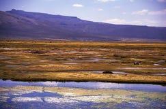 Highlands near Puno in Peru Stock Images