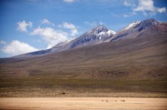 Highlands plain in the Ands. Peru, Stock Photography