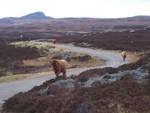 Highlands of Scotland traffic jam Royalty Free Stock Photo