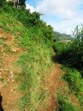 In the Highlands of Sri Lanka Stock Photos