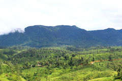 Highlands in Sri Lanka, where tea grows Royalty Free Stock Photos