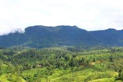 Highlands in Sri Lanka, where tea grows Royalty Free Stock Photos