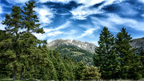 Highlands on a sunny day. Pine trees on a sunny day in the highlands Royalty Free Stock Image