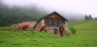 Highlands Of Turkey Stock Photos