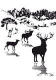 Highlands wildlife illustration Royalty Free Stock Photography