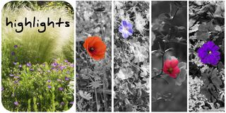highlight photos libres de droits