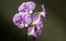In highlight, the details of a beautiful orchid royalty free stock image