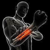 Highlighted arm Stock Images