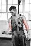 Highlighted bones of strong man lifting weights at gym royalty free stock photos