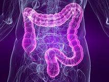 Highlighted colon Stock Images