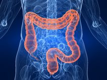 Highlighted colon Stock Image