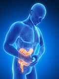 Highlighted colon. 3d rendered illustration of a man having bellyache Royalty Free Stock Photo
