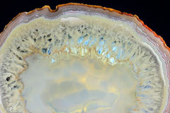 The highlighted Cut of white agate Royalty Free Stock Image