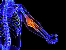 Highlighted elbow Stock Images