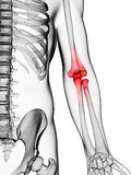 Highlighted elbow Stock Photography