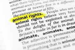 Highlighted English word `animal rights` and its definition in the dictionary Royalty Free Stock Photography