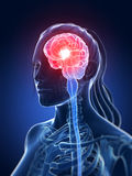 Highlighted female brain Royalty Free Stock Photo