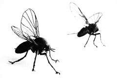 Highlighted flies royalty free stock photography