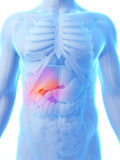 Highlighted gallbladder Royalty Free Stock Photo
