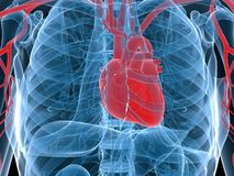 Highlighted heart Royalty Free Stock Photos