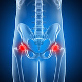 Highlighted hip joint Stock Images