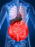Highlighted intestines Royalty Free Stock Photos