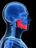 Highlighted jawbone. 3d rendered illustration -highlighted jawbone Royalty Free Stock Image