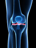 Highlighted knee joint Royalty Free Stock Photography
