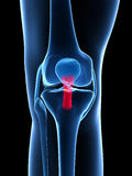 Highlighted knee joint Stock Photo