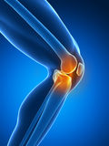 Highlighted knee joint vector illustration