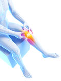 Highlighted knee joint Stock Images