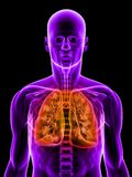 Highlighted lung Stock Image