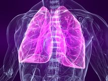Highlighted lung. 3d rendered illustration of a human anatomy with highlighted lung Royalty Free Stock Image
