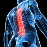 Highlighted male spine Stock Images
