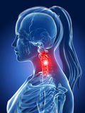 Highlighted neck Royalty Free Stock Photography