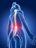 Highlighted nerve system vector illustration
