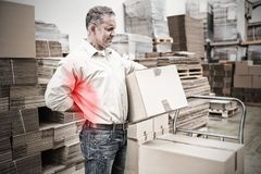Composite image of highlighted pain. Highlighted pain against worker with backache while lifting box in warehouse Royalty Free Stock Image